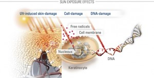 EUCERIN-AS-Factors-that-influence-skin-by-sun-04-infographic